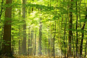 Holzdiebe-fällten-mit-schwerem-Gerät-dutzende-Bäume-Symbolbild